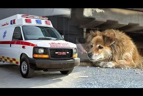 Rescate Animales
